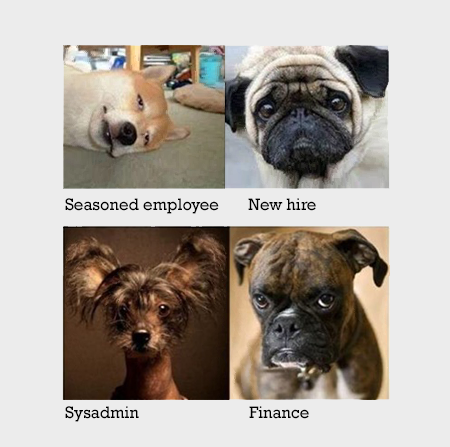 dogs-in-offices2